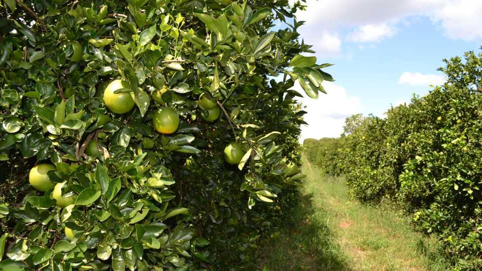 Biocontrols East 2017 tour stop in citrus country