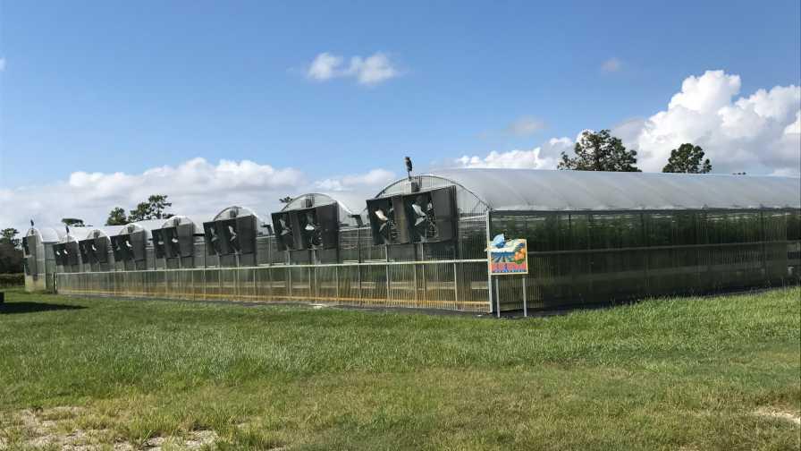 Blue Heron Nurseries greenhouses post-Irma