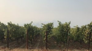 Little Winegrape Loss from California Wildfires