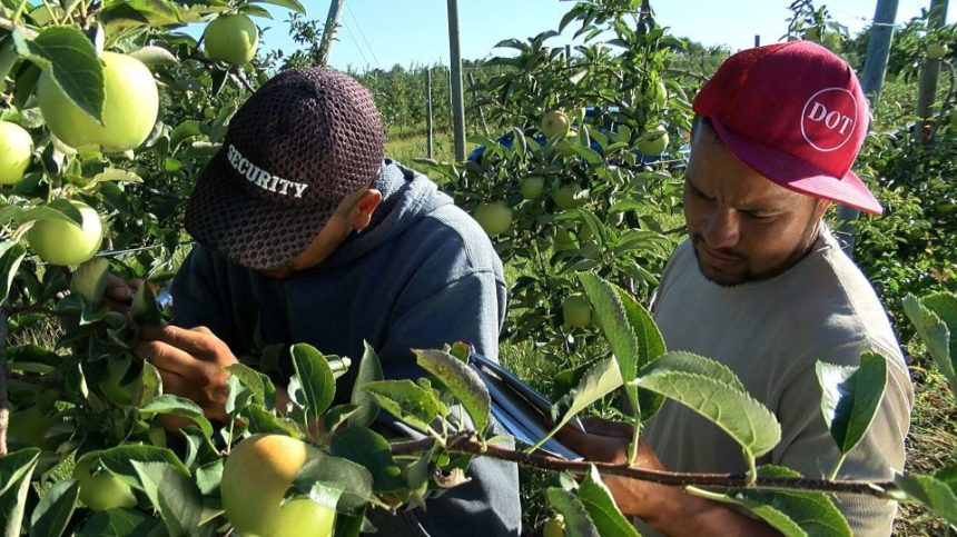 Penn State Extension Offers Horticulture Training for Spanish Speakers