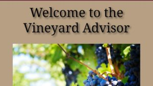 New Smartphone App Advises Grape Growers