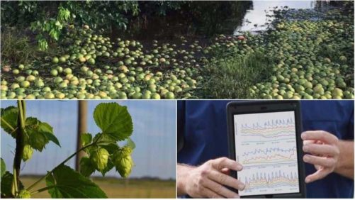 2017 a Standout Year for Florida Agriculture – in More Ways Than One