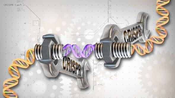 CRISPR-Cas-9-illustration-by-Ernesto-del-Aguila-III-NHGRI
