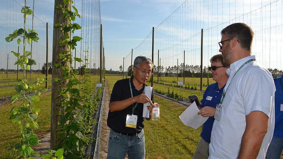 UF/IFAS researcher Zhanao Deng talks hops