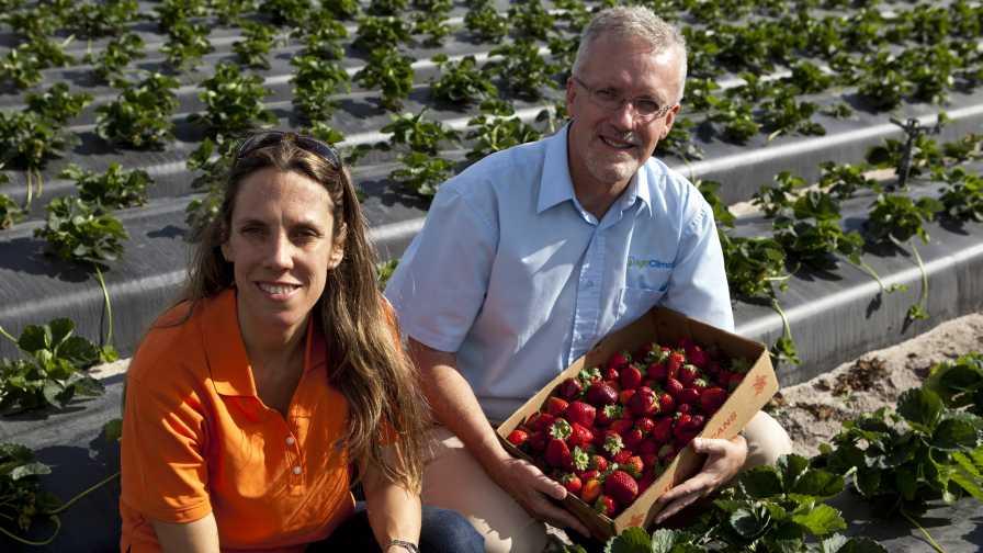 Natalia Peres and Clyde Fraisse talk Strawberry Advisory System