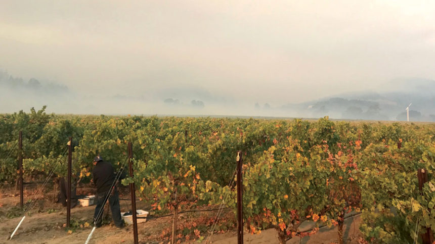 California Wildfires Lead to Concern over Smoke Exposure in Grapes