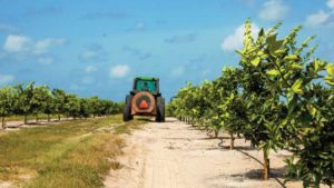 Results in After Citrus Bactericides Put to the Test