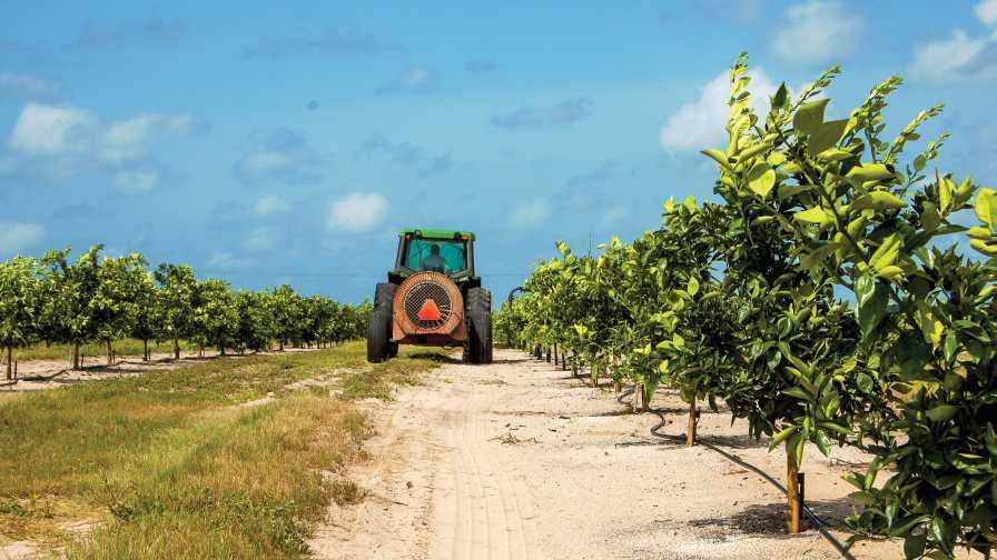 sprayer rolling through a young citrus grove
