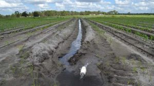 Sustainable Farming Projects in Florida to Share the Wealth