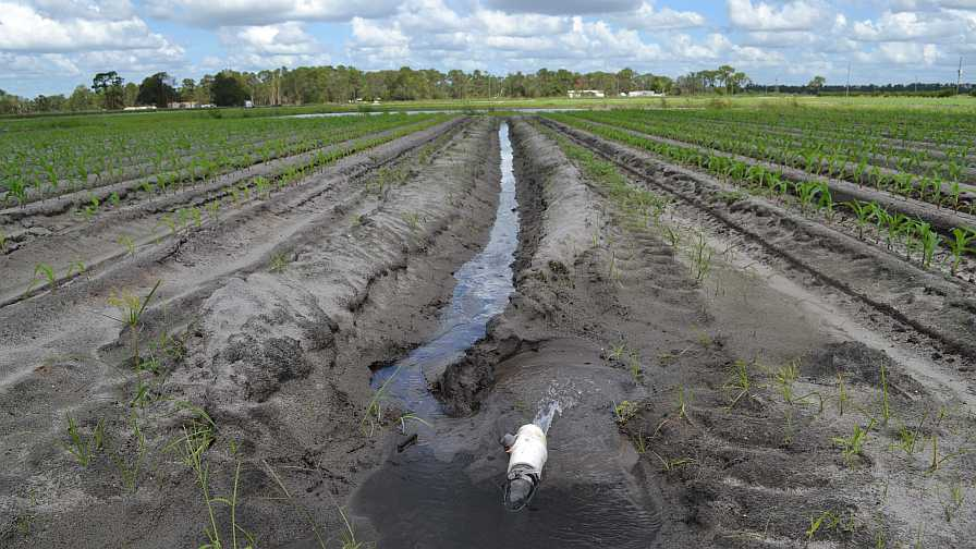 Vegetable field irrigation in Florida