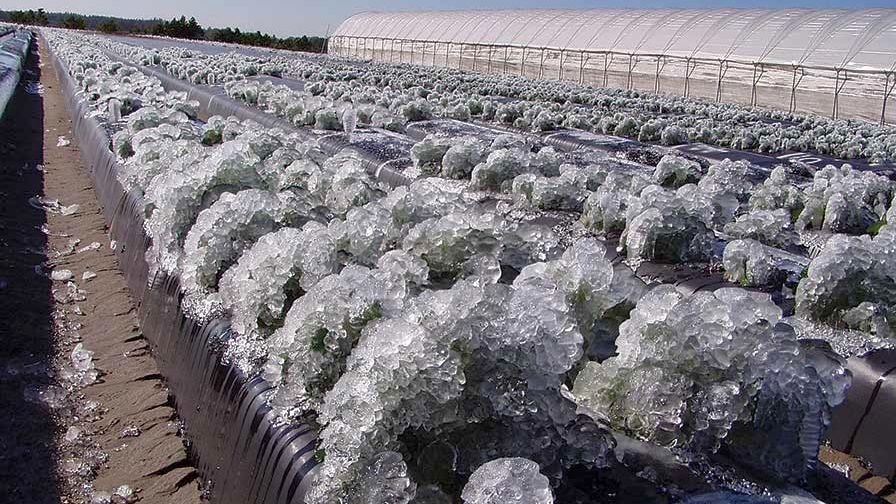 Frozen-crops-FEATURE