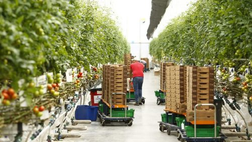 Insiders Welcome at Greenhouse Tomato Short Course
