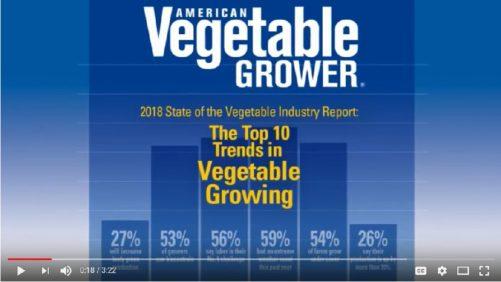 The Top Trends in Vegetable Growing
