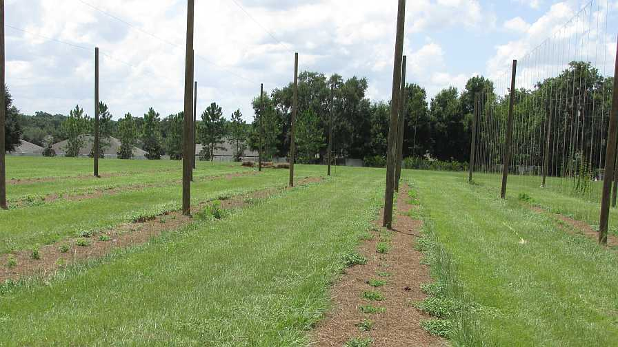 Tips For Florida Farmers Growing Hip To Hops Growing Produce