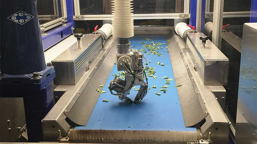 ISO robotic transplanter in action