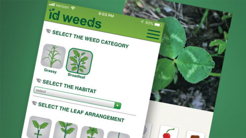 Smartphone Apps to Help You ID Weeds