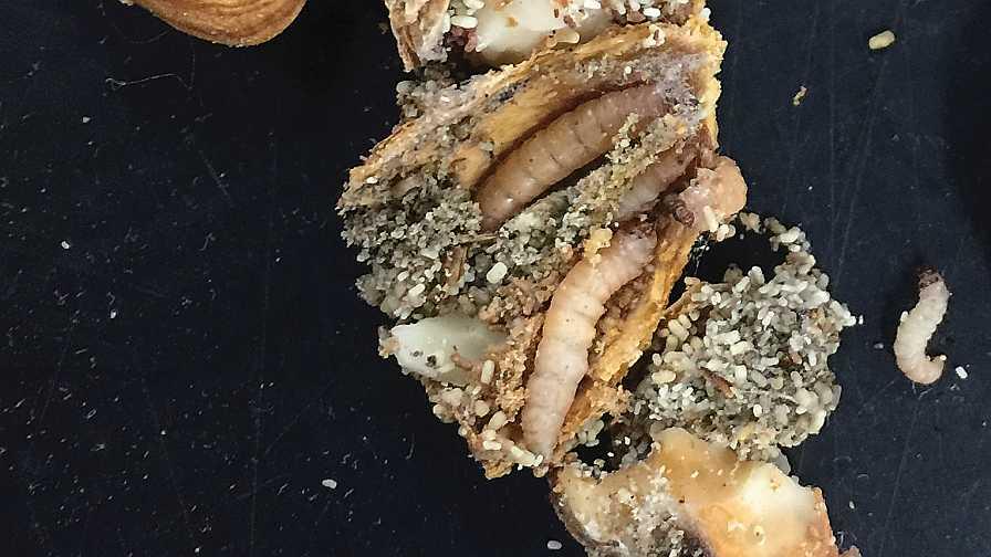 Navel orangeworm larvae on almonds