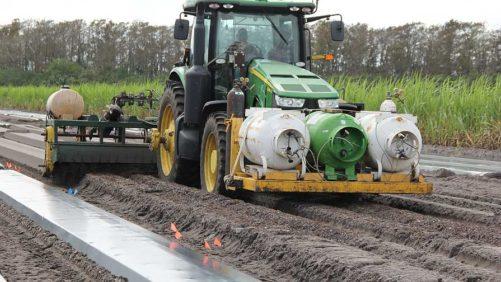Tips for Sustainable Soil Disinfestation in Vegetables
