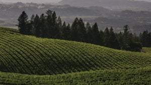 Report Shows 46% Jump in Certified Sustainable Vineyards