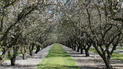 New Slate of Leaders Elected to Almond Board