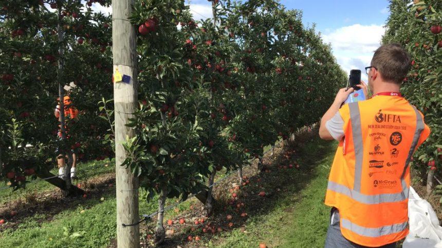 New Zealand Apple Growers Keeping Eye on Exports