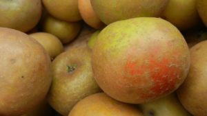 More Apple Varieties Thought Extinct Found