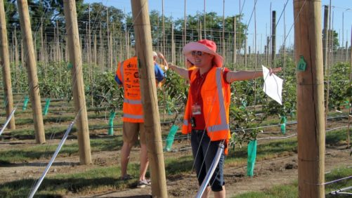 Innovation Part of New Zealand Apple Growers' DNA