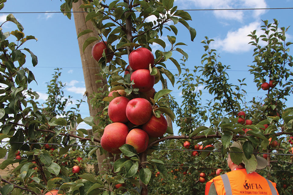 8 Things I Learned About New Zealand Apple Production And You