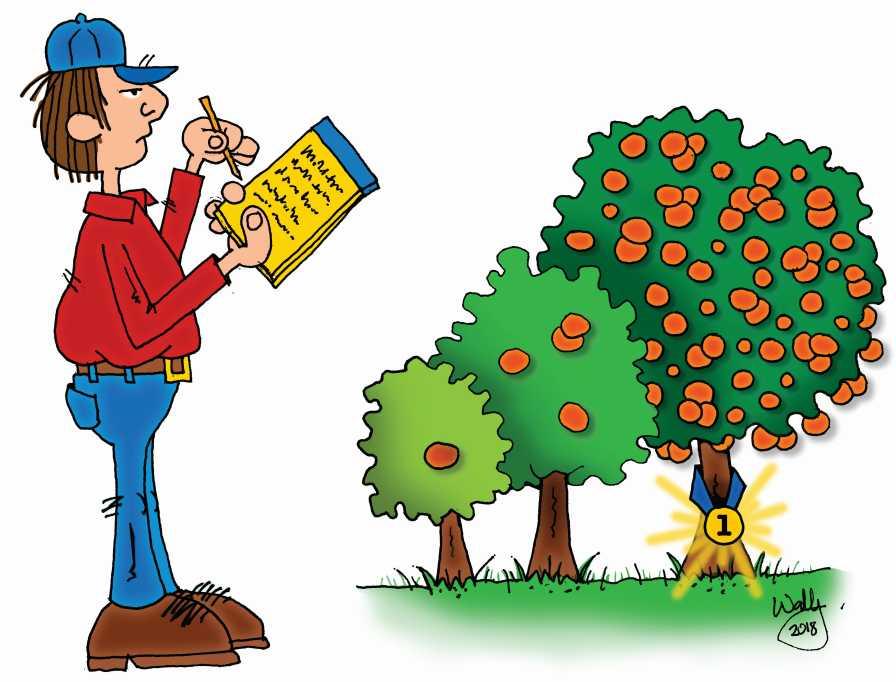 citrus evaluation cartoon
