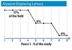 ARS-Brennan-insectary-study-percent-of-lettuce-displaced-by-alyssum