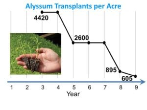Brennan-insectary-study-alyssum-transplants-per-acre