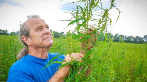 Will it Fly? Senate-Backed Farm Bill Makes Way for Hemp Growth