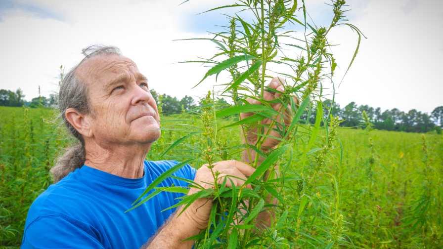 Bruce Perlowin of Hemp Inc. inspecting hemp plants in a field