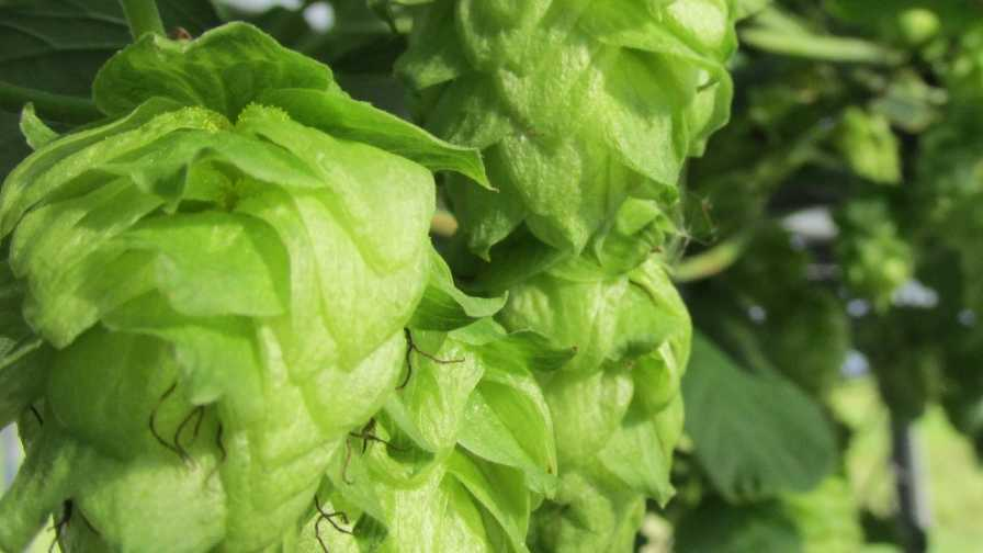 Compound Interest Percolating Around Power of Hops