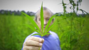 Can Hemp Weave its Way into Fabric of Florida Farming?