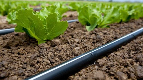 How to Get What You Need from Fertigation