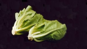 Romaine-lettuce-from-ARS