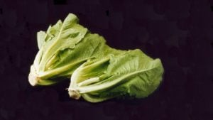 Yuma E. coli Warning now Involves all Romaine