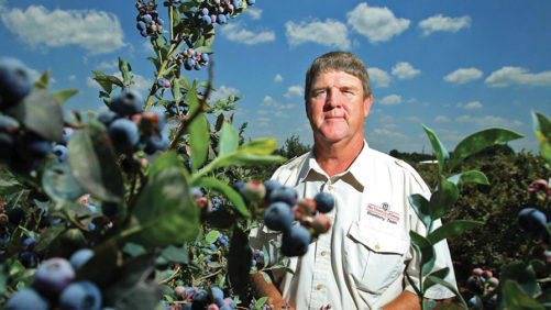 How PGRs Rescue Berries After Spring Freeze