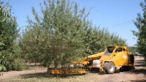 Bearing Almond Acreage Officially Hits 1 Million Mark