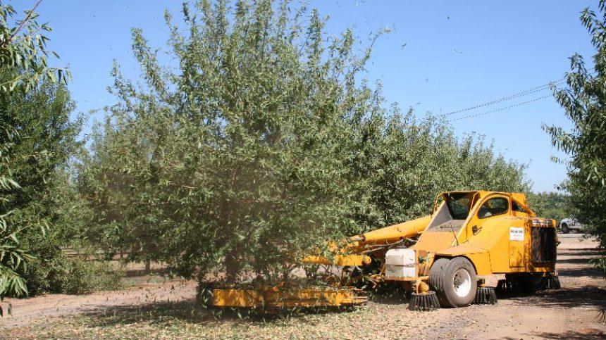 Bearing Almond Acreage Officially Hits 1 Million Mark