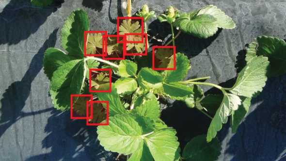 Robotic herbicide applicator