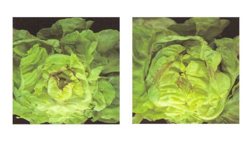 Calcium – the quiet hero of soil and plant health