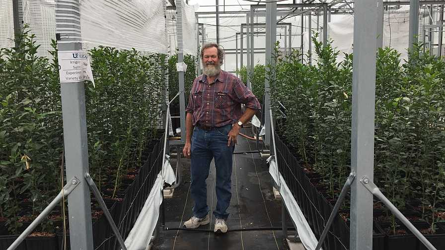 Dr. Richard Beeson standing in citrus greenhouse
