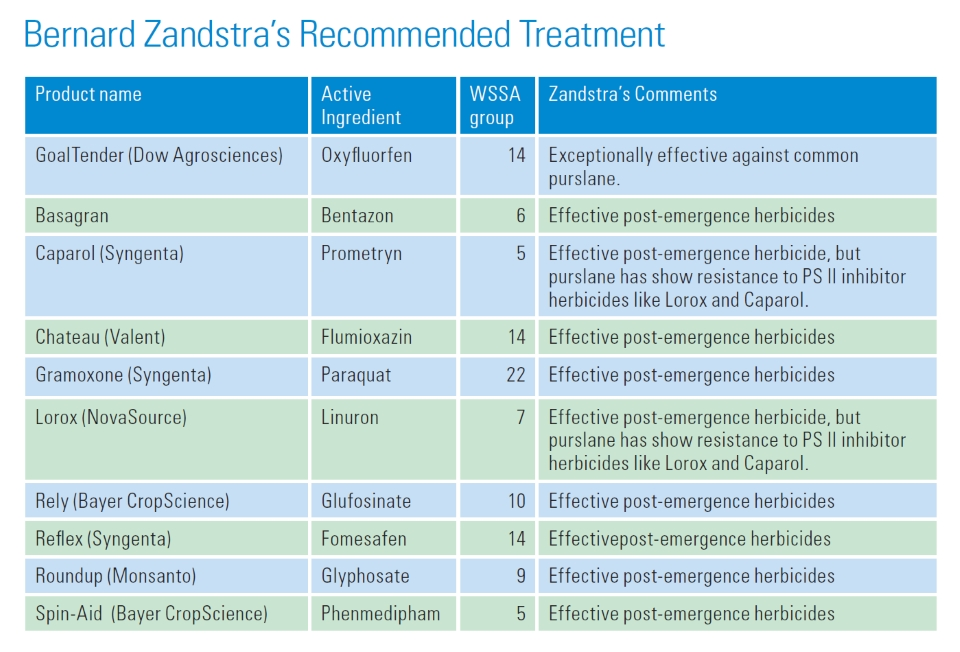 Bernard-Zandstra-recommended-treatments-for-common-purslane
