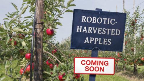 Change is Coming to the Fruit Industry: Mechanization is Taking Shape