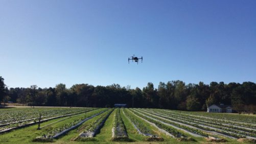 How High-Flying Technology Can Be a Game-Changer for Berries