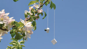 How This Novel Device Can Disrupt Mating of Fruit Pests