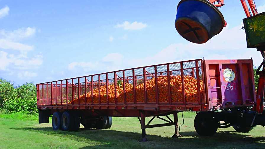 Truckload of Florida oranges