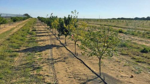 Sights Set on New Citrus Demonstration Block in Florida